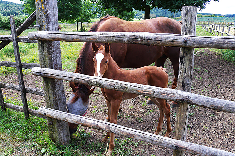 Potrero Grande - Agriturismo a Roma - I cavalli